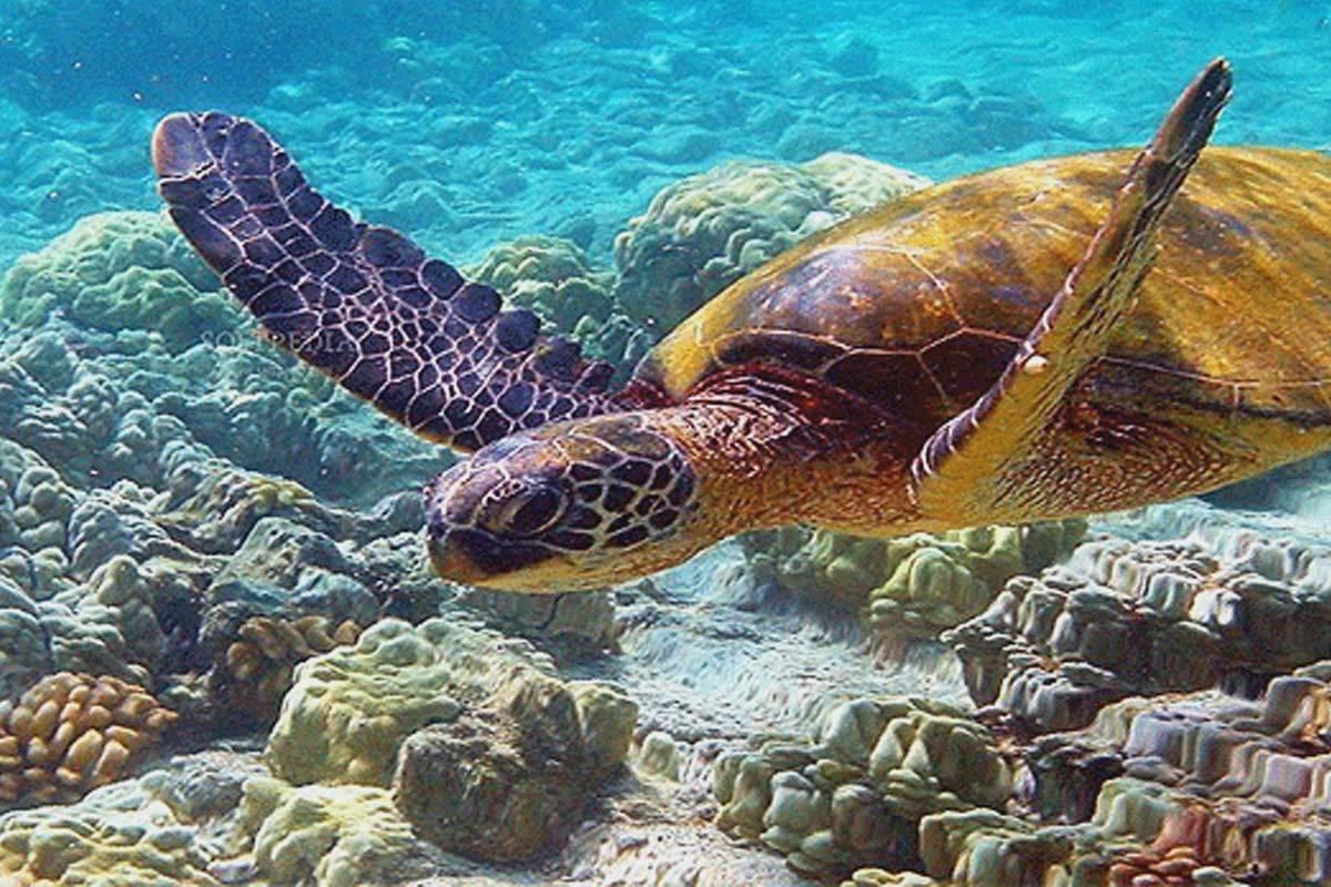 Island selago snorkeling