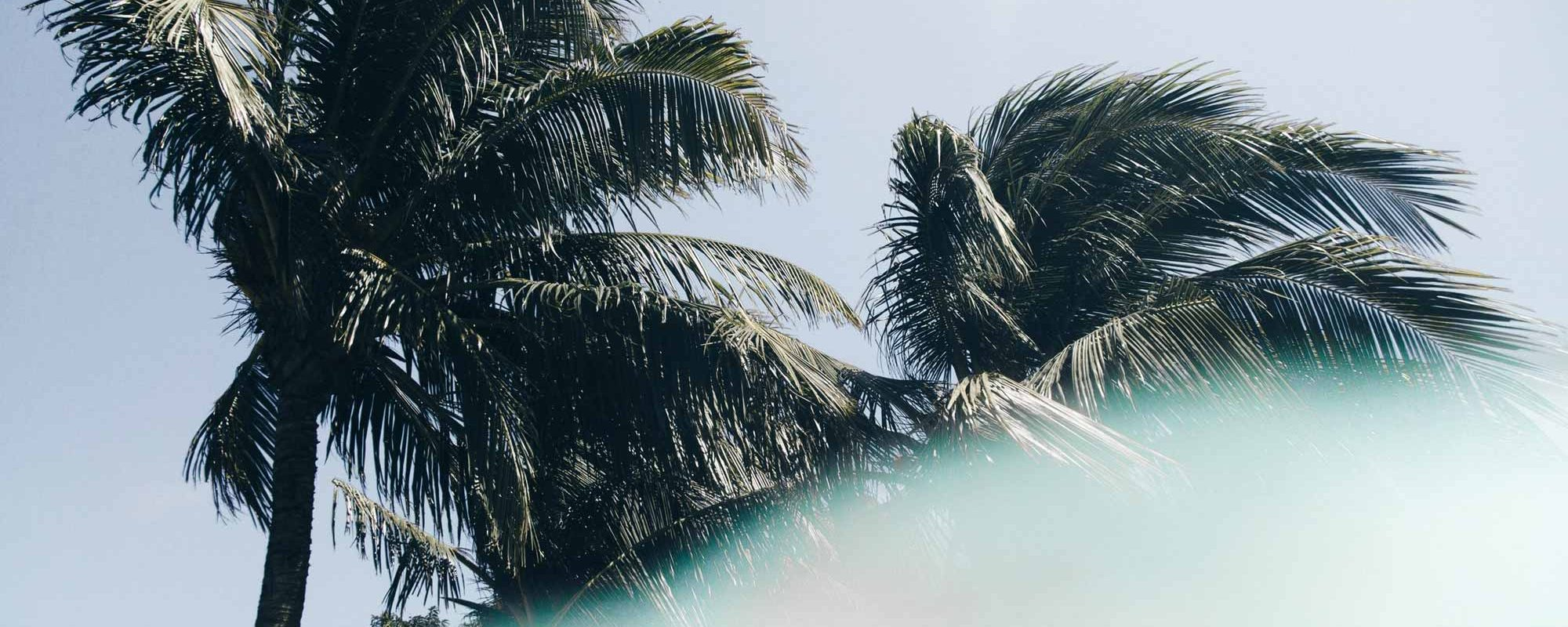 Palm Trees Nicaragua