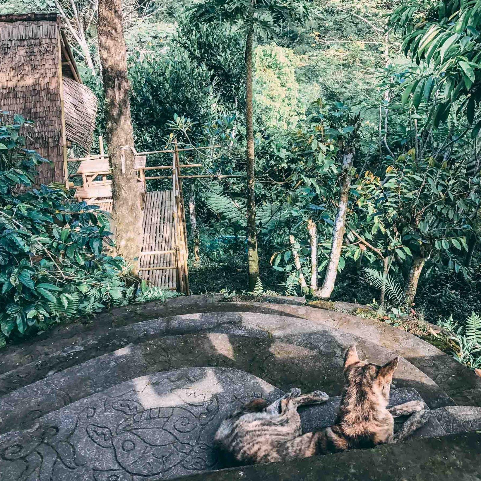 Putu Treehouse