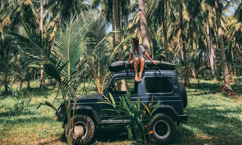 PalmtreesJava2